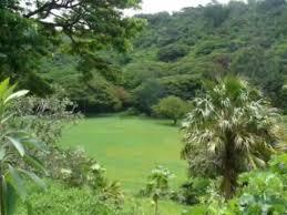 McBryde Gardens Kauai Hi