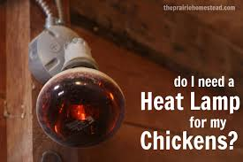 do my chickens need a heat l the prairie homestead