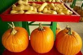 Marana Pumpkin Patch 2015 by Fall Pumpkin And Corn Maze Festivals Fill Your Plate Blog
