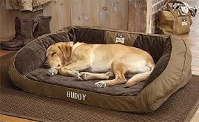 Tempur Pedic Dog Beds by Orvis Field Collection Memory Foam Dog Bed Orvis Field