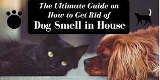 My Dog Stinks And Sheds A Lot by Ultimate Guide On How To Get Rid Of Dog Smell In House