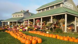Pumpkin Picking Ct Easton by Harlow Farm U2013 An Organic Farm Nestled Along The Shores Of The