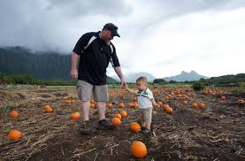 Waimanalo Pumpkin Patch Oahu by October 2014 The Langan ʻohana