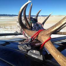 Meatforayear Pictures - JestPic.com 3pcsset Christmas Antlers Decoration For Car Truck Costume Photos Opening Day Of Wyomings Shed Hunting Season Outdoor Life Preserving Lvet Antlers On Deer Outdoors Aberdeennewscom Elk Tracks Galore Records Set At Boy Scout Antler Auction Headed To The Lower 48 Pic Taken In Yukon Canada Youtube Lumiparty Reindeer Suv Van And Amazoncom Mystic Industries Original Vehicle With Jumbo Redbrown Auto