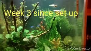 AquaAspire 55 Litre Planted Nano Cube Aquascape, 3 Weeks After Set ... How To Set Up An African Cichlid Tank Step By Guide Youtube Aquascaping The Art Of The Planted Aquarium 2013 Nano Pt1 Best 25 Ideas On Pinterest Httpwwwrebellcomimagesaquascaping 430 Best Freshwater Aqua Scape Images Aquascape Equipment Setup Ideas Cool Up 17 About Fish Process 4ft Cave Ridgeline Aquascape A Planted Tank Hidden Forest New Directly After Setting When Dreams Come True