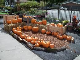 Alameda Pumpkin Patch 2015 by October 2011 Encinal Nursery