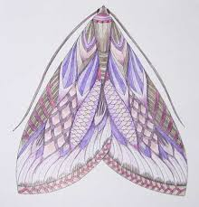 Pin Drawn Moth Millie Marotta 11