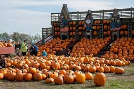 Pumpkin Picking Corn Maze Long Island Ny by These 10 Pumpkin Patches In New York Are Perfect For A Fall Day
