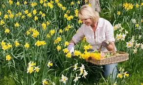 how to plant bulbs in september for a colourful garden