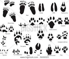 cat paw prints cat paw print images illustrations vectors cat paw print stock