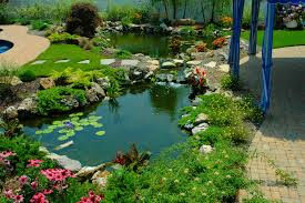 Koi Ponds Beautiful This Is The Design I Would Pick Just Fill In Fresh Ideas Fish Pond Design Koi Pictures Sustainable Backyard Farming How To Dig A Raise What Should You Build Ponds And Waterfalls To Make It Diy A Natural Your Institute Of Garnedgingsteishplantsforpond Garden With Waterfall Mini Outdoor Installation Hgtv Picture Home Fniture Ce Pontz Sons Landscape Koi Fish Pond Garden Ideas 2017 Dignforlifes Portfolio Designs Small Backyard Ponds