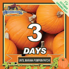 Oklahoma Pumpkin Patches by Marana Pumpkin Patch U0026 Farm Festival Home Facebook