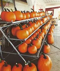 Pumpkin Patch Prince Frederick Md by Miller Farms
