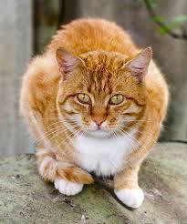 orange cat names orange cat names 135 best names for kittens