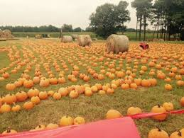 Pumpkin Patch Fort Collins by The 13 Best Pumpkin Patches In Mississippi