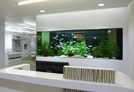 aquarium in der wand viele hilfreiche tipps und inspirationen