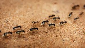 How to Get Rid of Ants 8 Home Reme s That Do the Trick NDTV Food