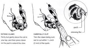 how to cut a cats nails how do you your pets nails are flynn veterinary