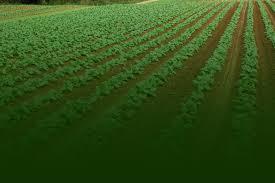 Pumpkin Picking South Nj by Hallocks U Pick Farm Strawberries U0026 Vegetables Flower U0026 Plant