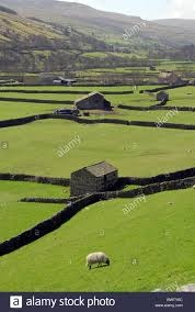 Yorkshire Dales Stone Barns Gunnerside. Britain British English ... Field Barns Reeth Swdale Yorkshire Dales England Stock Photo Llamas Suffolk Smallholders Annual Show Stonham Beautiful 17th Century Barn Shipped Over From Asks 33 Harmondsworth English Heritage Kettlewell North Stone Barns Walls View Foxleigh Farm The Roost Ref Prrj In Kiford Near New Barn Wikipedia Uk Derbyshire Eyam Hall Courtyard Old New England Drive By Pinterest Daylesford The Cotswolds Shutters Sunflowers