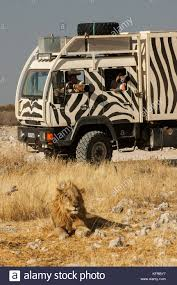 100 Safari Truck Zebra Painted Photographers Safari Truck Near A Male Lion Etosha