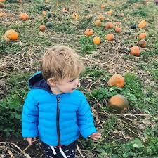 Toms Pumpkin Farm Huntley by Giovanna Fletcher Home Facebook
