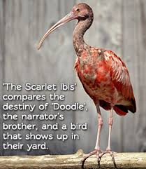 Scarlet Ibis Study Guide Lesson Plans Summary Analysis And More