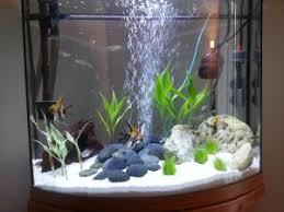 live aquarium plants bulbs aquarium design ideas