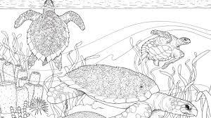 Sea Turtles A Coloring Book