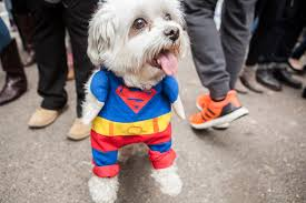 Tompkins Square Park Halloween Dog Parade 2017 by Get Ready The Tompkins Square Park Halloween Dog Parade Returns
