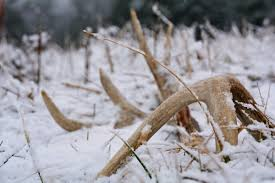 Springer Spaniel Shed Hunting by Shed Hunting Dog Training How To Train Your Dog To Shed Hunt
