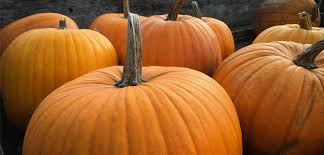 Old Auburn Pumpkin Patch by 19 Family Friendly Halloween Events In The Sacramento Area
