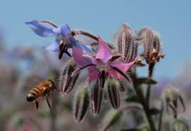 buying bee friendly nurseries which don t use neonicotinoids