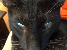 my cat has dandruff cat dandruff causes symptoms treatment cat world