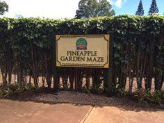 Hawaii s Pineapple Garden Maze Observatory and Maze