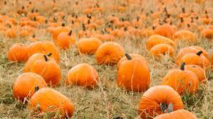 Frederick Maryland Pumpkin Patch by Best Pumpkin Patches In Washington D C Cbs Dc