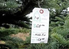 A 7 To 8 Foot Noble Fir Is Tagged For Sale On Visiting Christmas Tree Farm