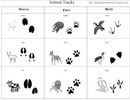 Leading Them To The Rock Animal Study Tracks