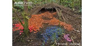 decoration bureau style anglais architects bowerbirds design build showy colorful homes