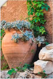 artland wandbild krug mit kakteen in der provence pflanzen 1 st in vielen größen produktarten alubild outdoorbild für den außenbereich
