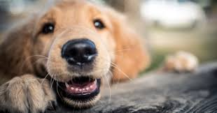 Pumpkin Rice For Dog Diarrhea by 4 Things You Can Do To Make Your Pet Happier And Healthier Huffpost