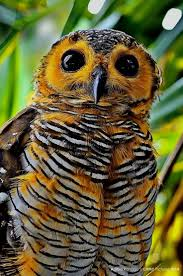 2270 Best Owls Images On Pinterest | Barn Owls, Animals And Children 55 Best Owl Images On Pinterest Barn Owls Children And Hunting Owls How To Feed Keep An Owlet Maya A Brief Introduction The Common Types Of Six Reasons Why You Dont Want An Owl As Pet Bird Introducing Gizmo Baby Whitefaced Youtube 2270 Animals 637 Oh Meine Uhus I Love Owls My Barn Cat Baby By Disneyqueen1 Deviantart All Things Nighttime Predator Cute Animals