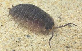 petites betes dans la maison identification insectes infestation ca