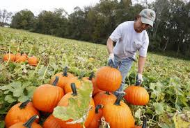 Pumpkin Picking In Freehold Nj by 10 Places To Go Pumpkin Picking In New Jersey Nj Com