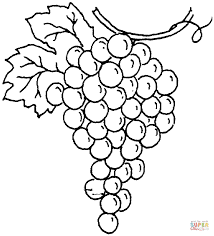 Download Coloring Pages Grapes Page Free Book