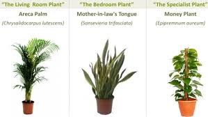 Plants In Bathroom Good For Feng Shui by Grow Fresh Air In Your Home Office And Workplace Top Air