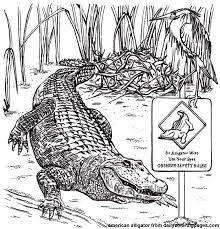 Texas American Alligator Animal Coloring Pages