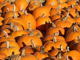 Pumpkin Patch Half Moon Bay Ca by It U0027s Time To Celebrate All Things Pumpkin In Half Moon Bay Half