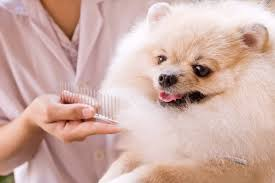 My Lhasa Apso Is Shedding Hair by 20 Tips To Control Dry Skin And Shedding In Dogs And Cats
