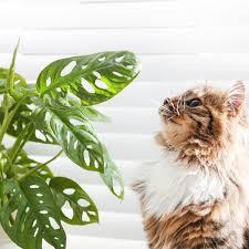 tierfreundliche zimmerpflanzen ungiftige pflanzen für haustiere